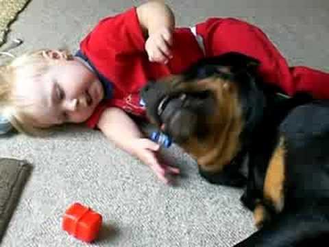 il migliore amico del bambino, il suo rottweiler
