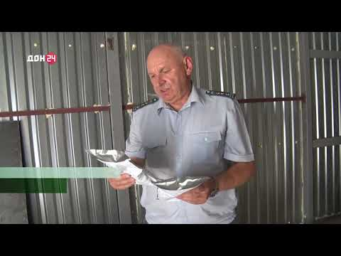 Управлением Россельхознадзора проведен отбор проб импортных семян, поступивших на территорию Ростовской области