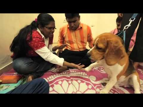 Animal Assisted Therapy with Adults on YouTube