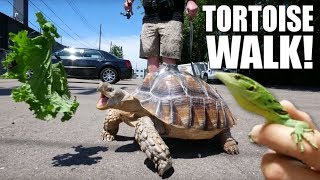 WALKING MY PET TORTOISE!! KILLER MONITOR LIZARDS!!  BRIAN BARCZYK by Brian Barczyk