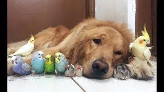 Video Cute Parrots Videos Compilation cute moment of the animals - Soo Cute! #1 MP3, 3GP, MP4, WEBM, AVI, FLV Juli 2019