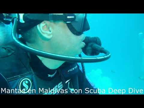 Mantas oceánicas en Maldivas