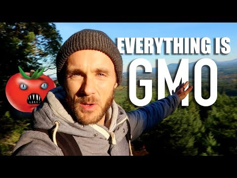 Nutrition - LET'S TALK FOOD! GMO'S, MISO, OATS, CHIA & BTW ALMONDS WILL KILL YOU!
