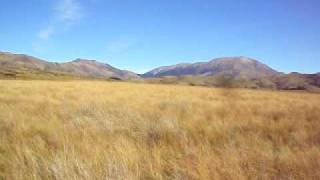 Visit a red tussock wetland in beneath the Torlesse Range, in Central Canterbury, with the Regional Biodiversity Coordinator.