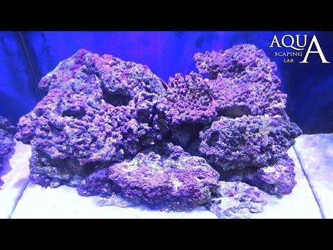 acquariofilia - rocce vive
