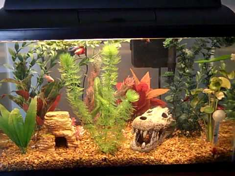 Aquaculture home starter kit 10 aquarium 1kt customer for How much does a betta fish cost