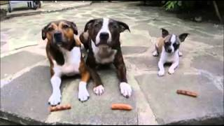 Nonton Little Dog Steals Big Dogs Sausages Film Subtitle Indonesia Streaming Movie Download