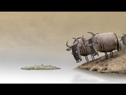 Funny Friday - Wildebeest