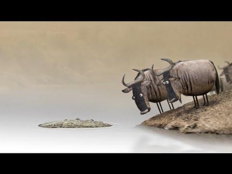 Funny Short Wildebeest