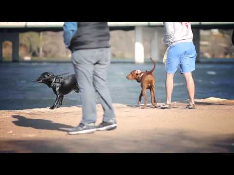 Redbone Coonhound Chases a Kite | The Daily Puppy