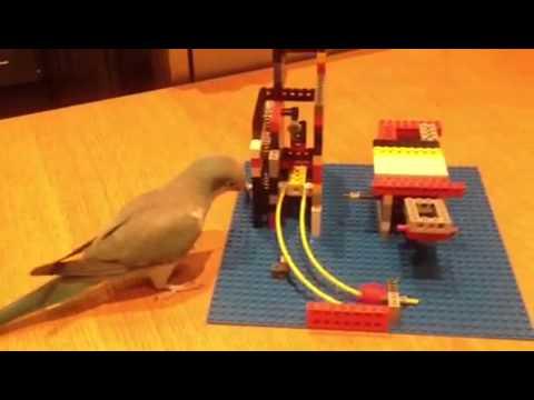 Fågel leker med lego