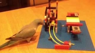 This Bird is a Brilliant Puzzle Solver