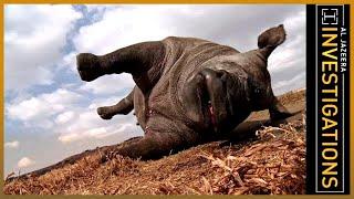 Al Jazeera Investigates - The Poachers Pipeline