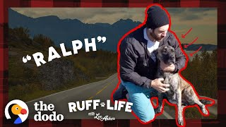Huge Mastiff Mix Has The BEST Reaction To Getting Adopted | Ruff Life With Lee Asher by The Dodo