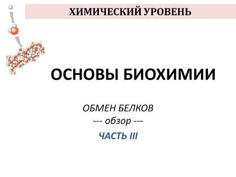 ОБМЕН БЕЛКОВ - часть 3