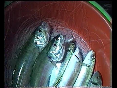 ψαρεμα - Ψαρεμα !!!!!!! με ολους τους τροπους αρκει να παρουμε λιγη αλμυρα!!!!!!