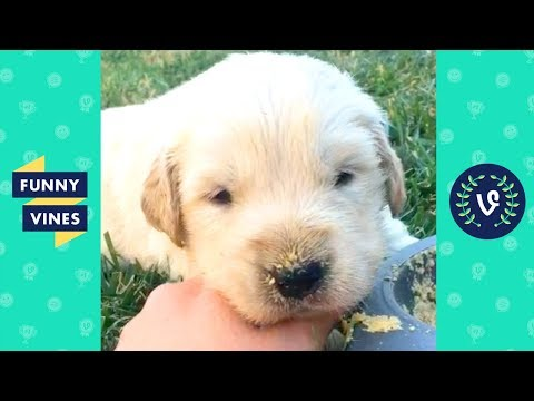 TRY NOT TO LAUGH - Funny PETS & Cute ANIMALS! | Funny Videos October 2018