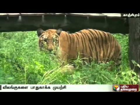 Animals-in-Vandalur-Zoo-tackles-summer