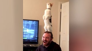 Video Are this the BEST CAT FAILS YOU'VE EVER SEEN or what?! - Extremely FUNNY CAT compilation MP3, 3GP, MP4, WEBM, AVI, FLV Mei 2018