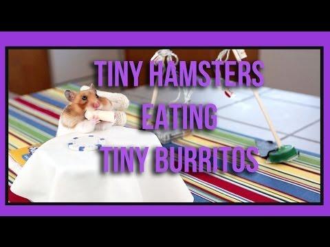 Tiny Hamsters Eating Tiny Burritos