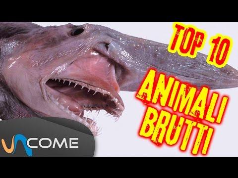 gli animali più brutti del mondo!