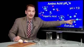 Amino Acid PKa