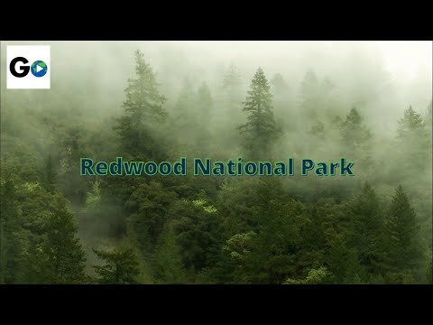 redwood - Redwood, California -- Home to the tallest trees on earth. Buy the complete 58 National Parks on DVD: http://amzn.to/11dLm7S.