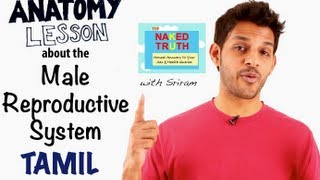 Basic Male Reproductive Anatomy - Tamil