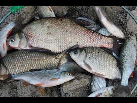 Рыбы, живущие в реках Урала