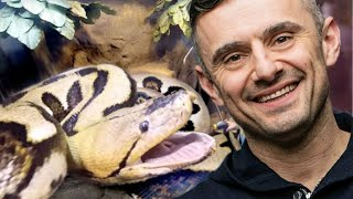 FEEDING HUGE SNAKES LIKE GARY VEE!! | BRIAN BARCZYK by Brian Barczyk