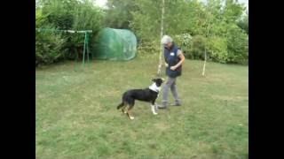Fiche jeu: Renforcer la place du chien à son côté (Au pied)
