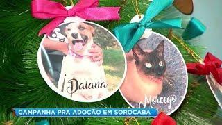Sorocaba: abrigo inova e cria árvore de Natal para incentivar a adoção de animais