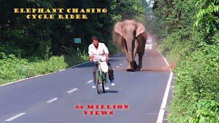 Video Elephant Chasing Cycle Rider. MP3, 3GP, MP4, WEBM, AVI, FLV Juli 2017