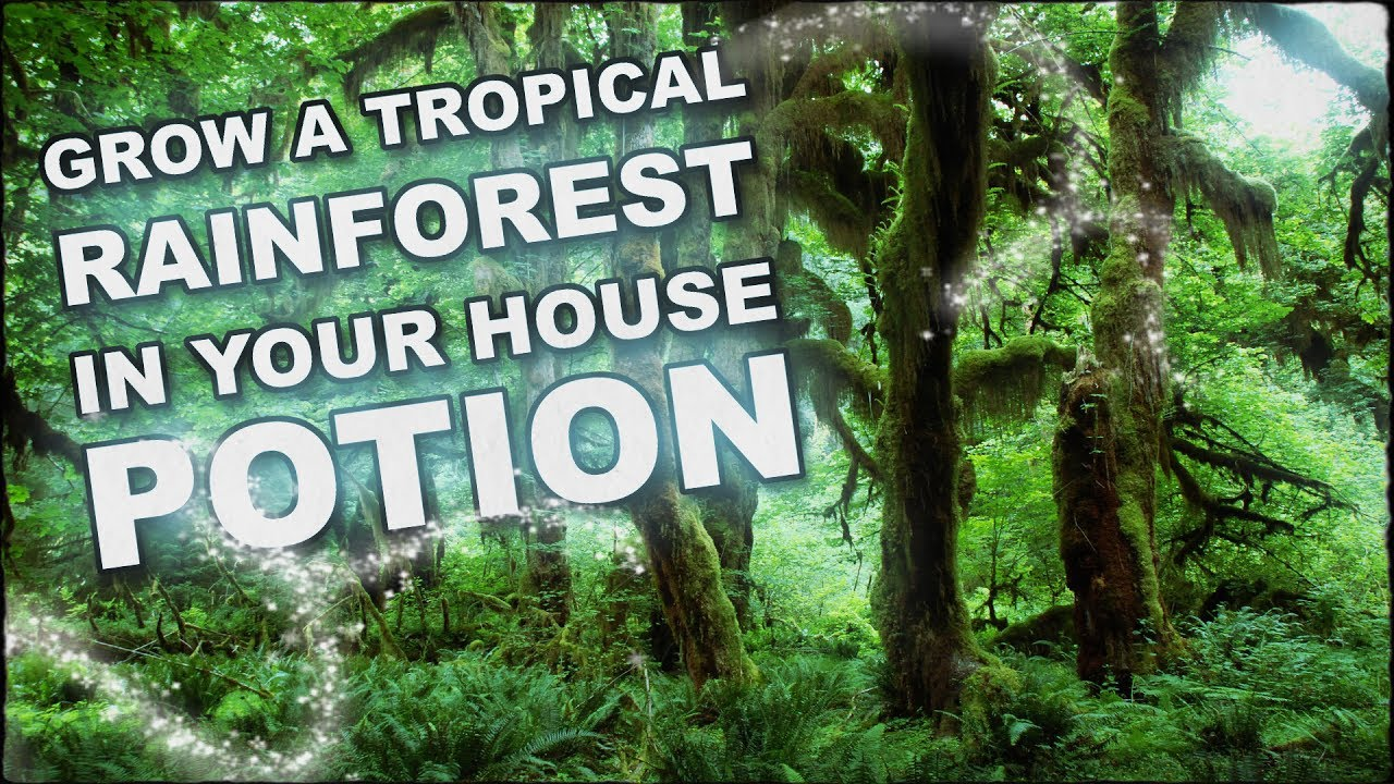 How To Grow A Tropical Rainforest In Your Living Room With A Potion