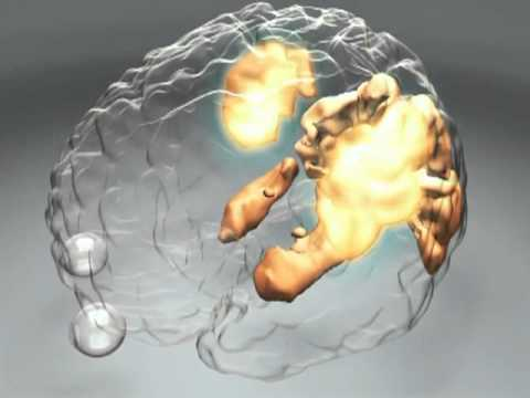 How Does the Brain Work? – Human Cognition | PSYCHOLOGY & BRAIN SCIENCE VIDEO