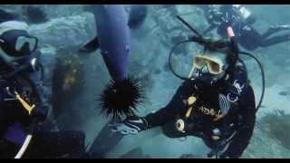 Forster Australia  City pictures : Diving @ Forster, Australia. Feeding a Blue Groper