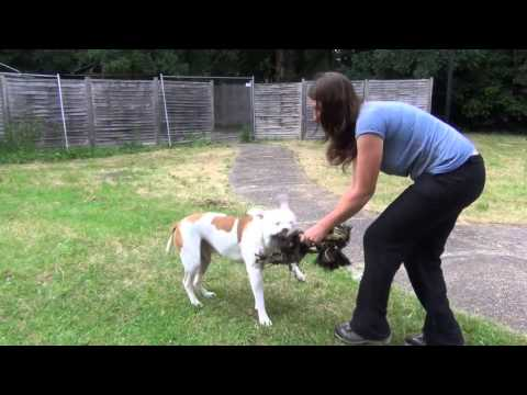 Dog Training Video – Toy Play
