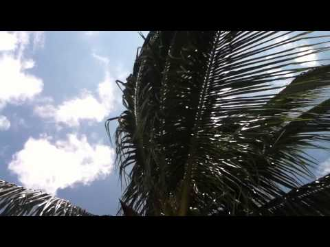 relaxing-palm