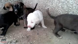 Feeding Stray Dog & She's Feeding 7 Puppies