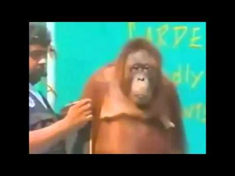 So Funny Monkey