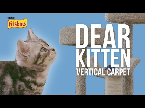 Dear Kitten: The Vertical Carpet