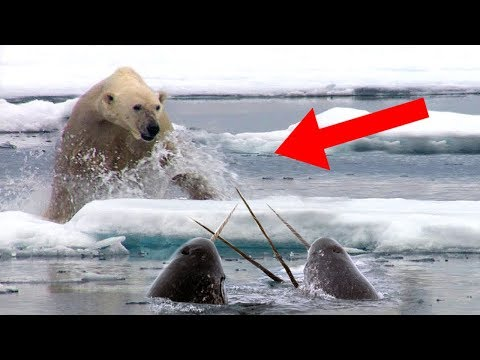 Most Fascinating Arctic Animals That Exist!