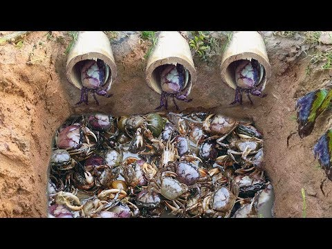 Top 5  Video 2017 Amazing Man Make 5 Fish Trap  Crab Trap & Eel Trap In Cambodia
