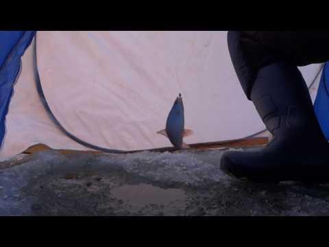плотва окунь на чертика видео