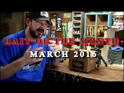 Video BAIT OF THE MONTH - March 2016 Berkley PitBull download in MP3, 3GP, MP4, WEBM, AVI, FLV January 2017