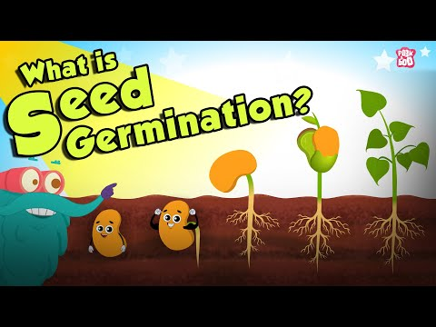 What Is Seed Germination? | SEED GERMINATION | Plant Germination | Dr Binocs Show | Peekaboo Kidz
