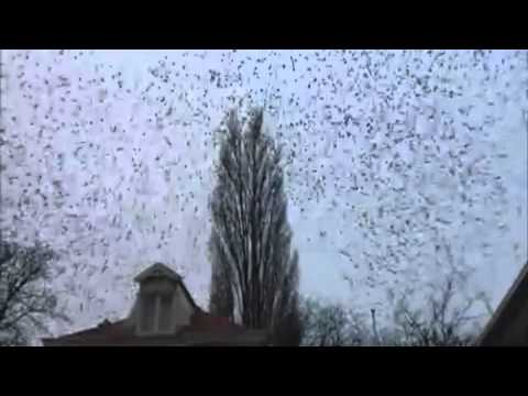 group of birds fly simultaneously away - uno spettacolo della natura!