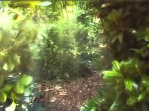 Max Igan-Sovereignity Through Trust Law & Non Compliance 3-4