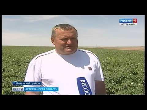 Об установке феромонных ловушек на полях КФХ в Астраханской области