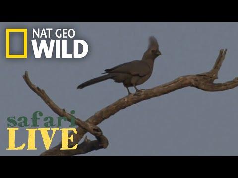 Safari Live - Day 14   Nat Geo WILD